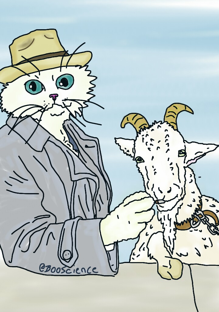 curse of the billy goat