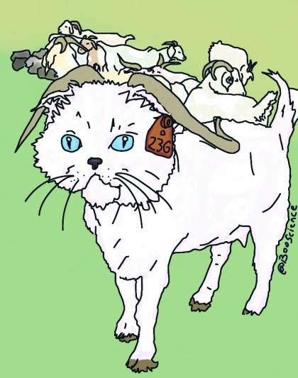 Hefner Goats OKC Catified